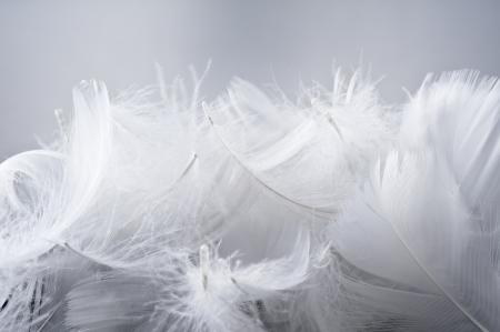 灰色の背景に鳥の白い羽