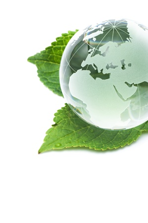 Clear glass globe with fresh green leaves  photo