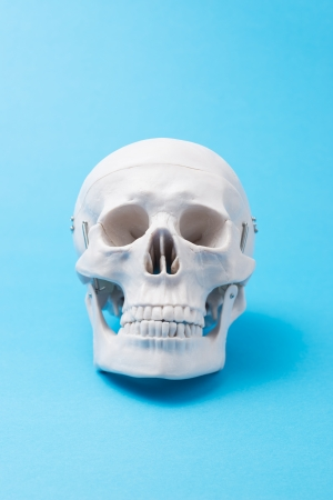 human skull model on light blue background photo