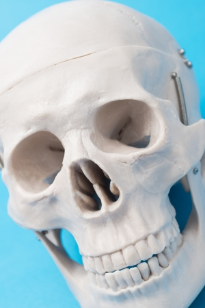 close up of human skull model photo