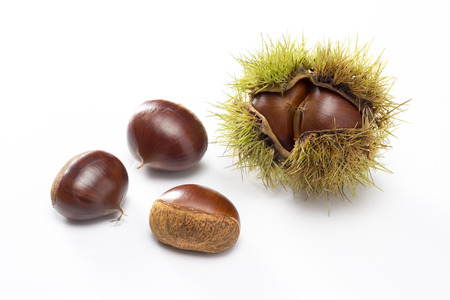 chestnut with husk on white background