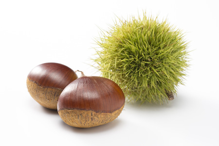 marron: chestnuts with green husk on white background