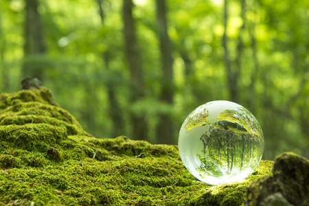 transparent globe: Forest and a transparent globe
