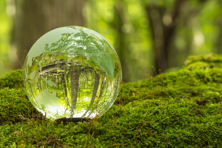 Forest and a transparent globe