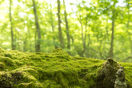 Fresh green and moss Stock Photo