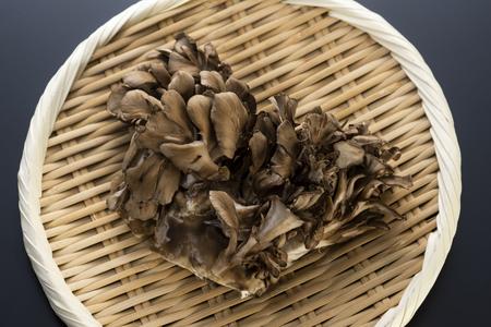 Japanese name maitake, Grifola frondosa