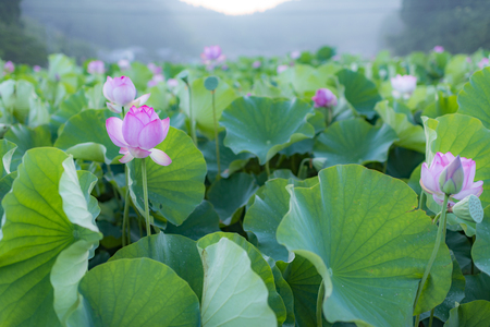 From the ancient lotus fruit 2000 years ago it has bloomed from lotus.
