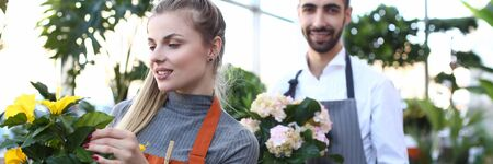 Woman and Man Holding Domestic Flower in Pots. Blonde Girl Looking at Yellow Blooming Plant with Green Leaves. Male Gardener with White Hydrangea in Flowerpot. Florist Wearing Apron at Botanic Shop