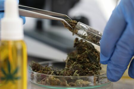 Female chemist in blue protective gloves gets marijuana extract oil in chemistry lab background closeup. Quality checks control cbd oil concept