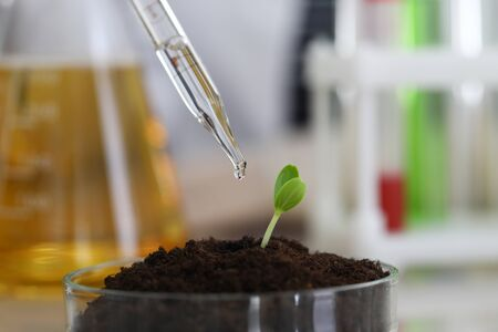 Chemist moisturizes soil with a dew pipette in a chemical laboratory closeup backgroun. Science research education concept Stock Photo