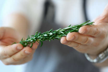 Close up of man holding fresh rosemary twig in hands while cooking recipe at home. Cooking recipes concept