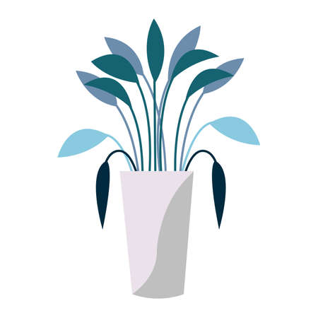 House plant with turquoise green and blue leaves in gray pot isolated on white background. Flat cartoon style. Graphic botanical element. Interior decoration. Gardening. Tropical flower. For postcards Illustration