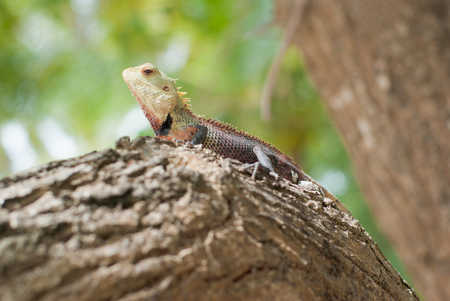 Reddish lizard resting on a tree branch