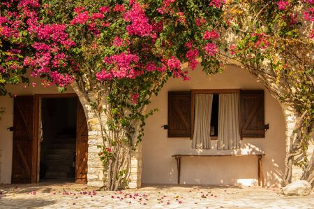 Beautiful Cyprus house covered with magenta flowers (Bougainvillea spectabilis) 版權商用圖片