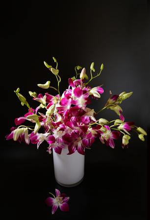 cattleya: Cattleya in vase