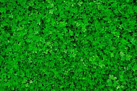 sward: Beautiful green sward
