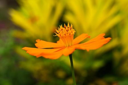 Beautiful Floral Stock Photo - 10603462