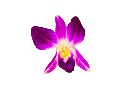 purple orchid isolated on a white background Stock Photo - 10676095