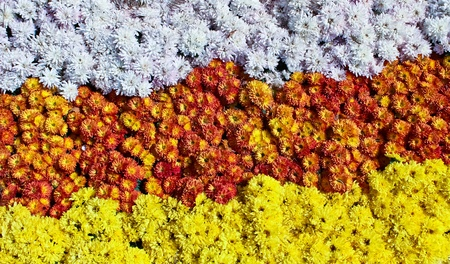 Flower Wall,Background Stock Photo - 12123575