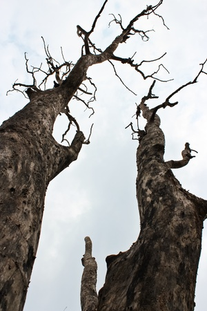 allegory: Dead two tree Stock Photo