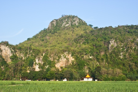 Sugarcane field is grown on the mountain  photo