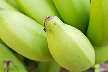 close up young green banana on tree Stock Photo - 13260606