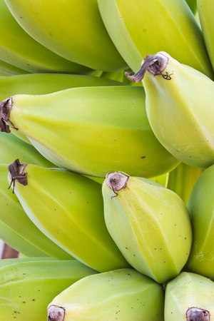 close up young green banana on tree Stock Photo - 13260608