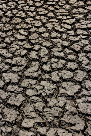 detail of a cracked earth Stock Photo - 13439231