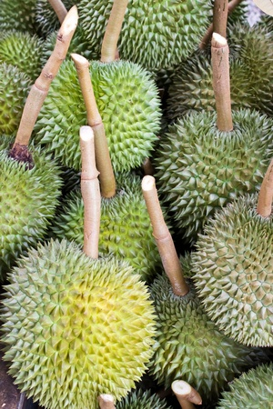 Many durians, king of the fruits in Thailand Stock Photo - 13439124