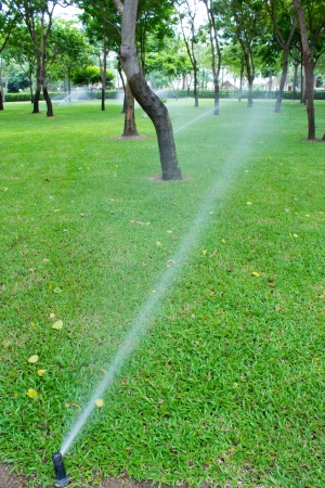 Watering the Lawn and park with Sprinkler