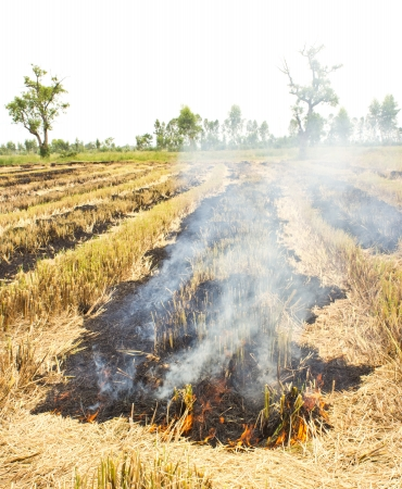 Fire was burning straw  Rice straw left over from the harvest was burned