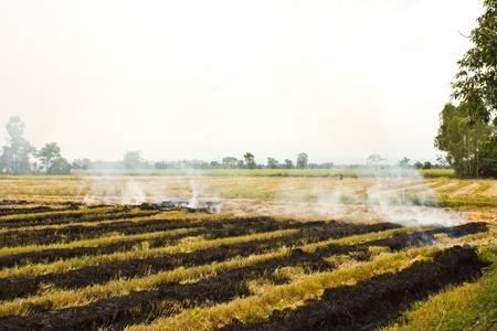 Le feu a été brûler la paille La paille de riz reste de la récolte a été brûlé