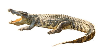 krokodil: Gef�hrliche Krokodil offenen Mund