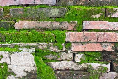 Texture of old Brick wall covered green moss photo