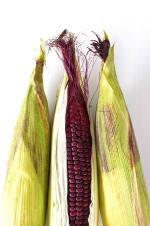 waxy: Closeup of Purple Waxy Corn isolated on white background