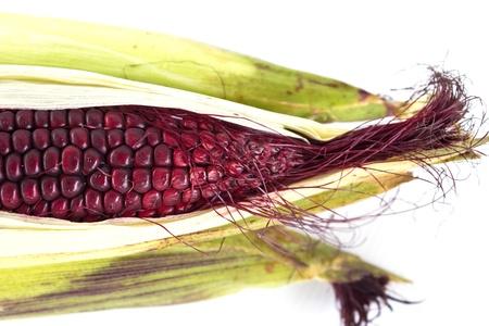 クローズ アップの紫ろうのトウモロコシ白い背景で隔離 写真素材