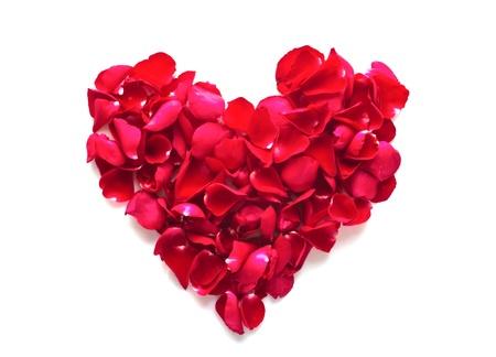 赤いバラの花びらを白で隔離されるの美しい心