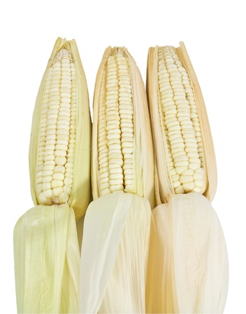 waxy: many corn isolated on white background