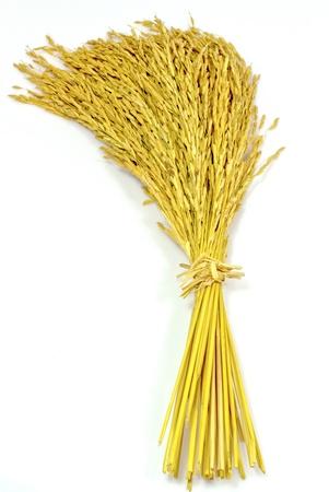arroz blanco: arroz arroz jazm�n en fondo blanco Foto de archivo