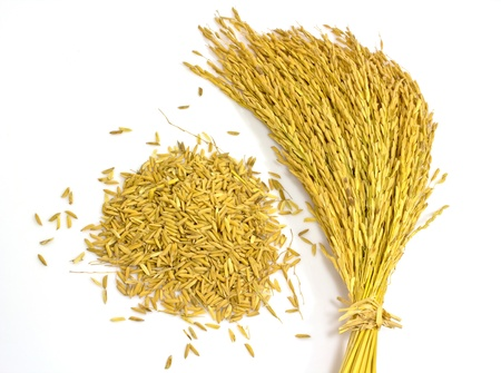 jasmine rice: arroz arroz jazm�n en fondo blanco Foto de archivo