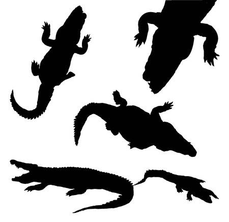 collection of silhouette crocodile isolated on white background Foto de archivo