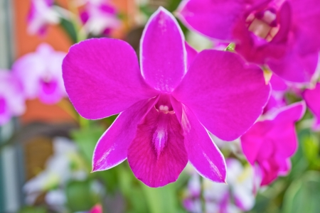 Close up detail of small purple orchids against a blurred background Stock Photo - 17311607