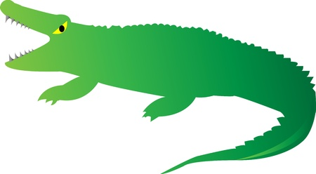 Cute Looking a Crocodile on white background Stock Photo - 18093952