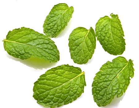 fresh mint leaves isolated on white background  photo