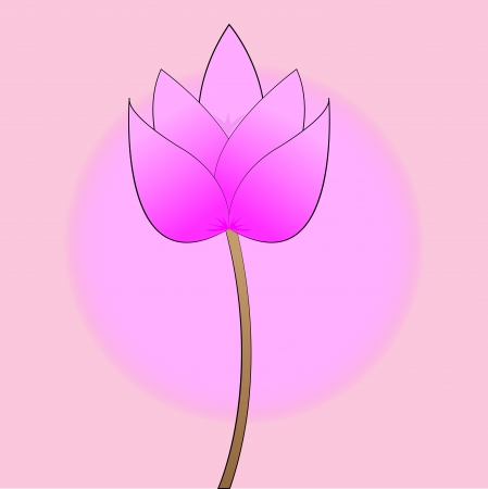 buddha lotus: pink lotus blossom on a pink background