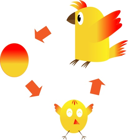 The life cycle of a chicken on a white background. Stock Photo - 18344357