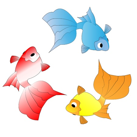 Three color goldfish on a white background photo