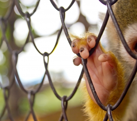 Hands of the monkey cage at the zoo  photo