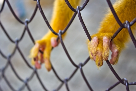 Hands of the monkey cage at the zoo
