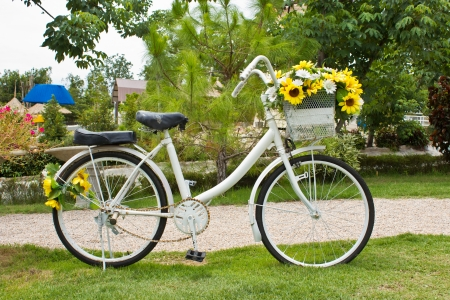 yellow flower on a decorative old white painted bicycle  in garden photo